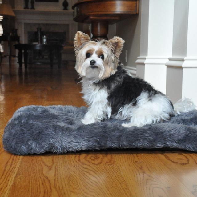 Doggie Design(ドギーデザイン)犬用クッション スランバー ミンキー フェイク ファー ドッグ クッション グレー