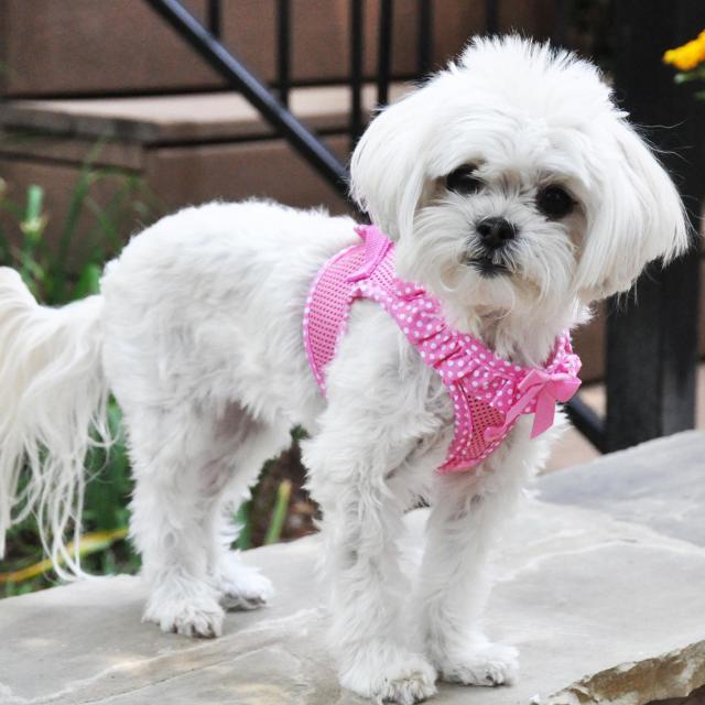 Doggie Design(ドギーデザイン)American River Harness Pink Polka Dot アメリカン リバー ハーネス ピンク ポルカドット